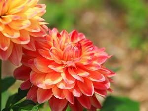 夏の花11