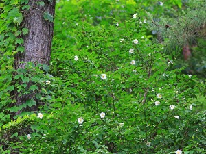夏の花10jpg